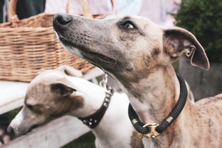 Doggy Style Market (image supplied)